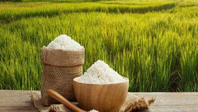 برنج کشوری